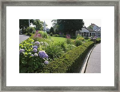Public Garden With Blooming Hydrangeas Framed Print by Darlyne A. Murawski