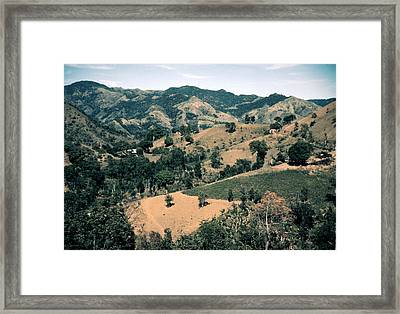 Puerto Rico. Forest And Clear Cut Framed Print by Everett