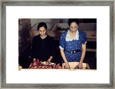 Puerto Rico. Women Sorting And Packing Framed Print by Everett