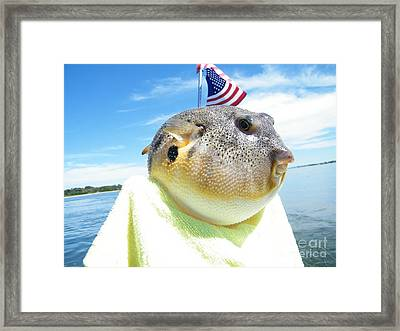 Puffer One Framed Print by Laurence Oliver