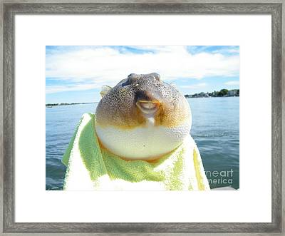 Puffer Smile Framed Print by Laurence Oliver
