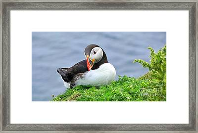 Framed Print featuring the photograph Puffin by Lynn Bolt