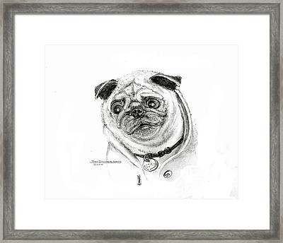 Framed Print featuring the drawing Pug by Jim Hubbard