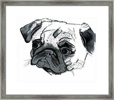 Pugsly Framed Print