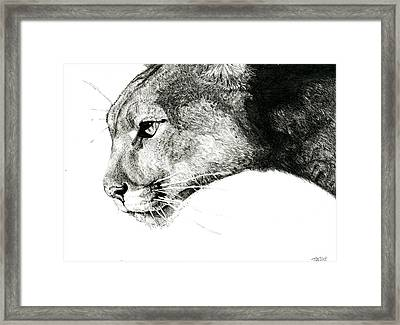 Puma  Framed Print by Ian Tullock