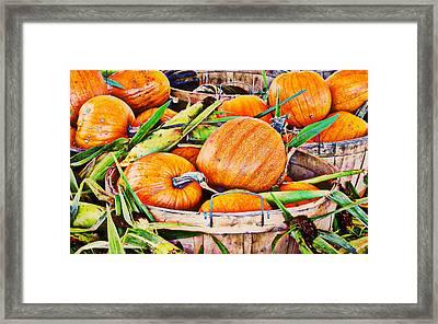 Pumpkin And Corn Combo Framed Print by Ms Judi