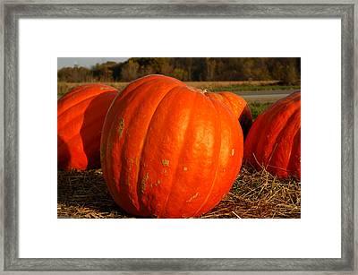Pumpkin Hay Ride Framed Print by LeeAnn McLaneGoetz McLaneGoetzStudioLLCcom