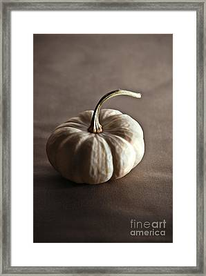 Pumpkin Framed Print by HD Connelly