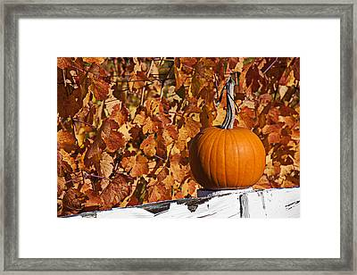 Pumpkin On White Fence Post Framed Print by Garry Gay