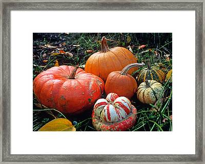 Pumpkin Patch Framed Print by Kathy Yates