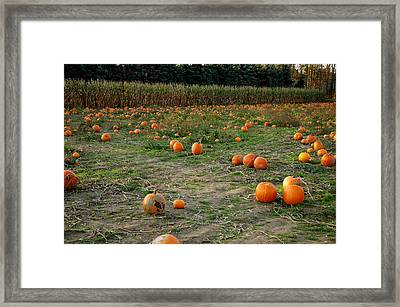 Pumpkin Patch Framed Print by LeeAnn McLaneGoetz McLaneGoetzStudioLLCcom