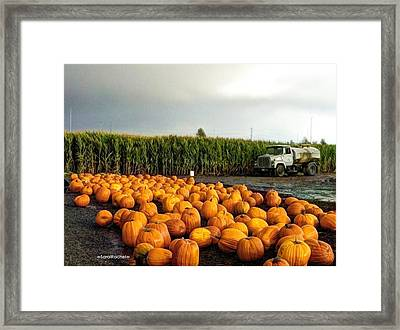 Pumpkin Patch Round Up Framed Print by Sarai Rachel