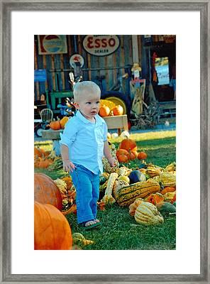 Pumpkin Framed Print by Phil Burton