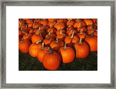 Pumpkin Pie Anyone Framed Print by LeeAnn McLaneGoetz McLaneGoetzStudioLLCcom