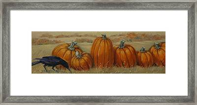 Pumpkin Row Framed Print