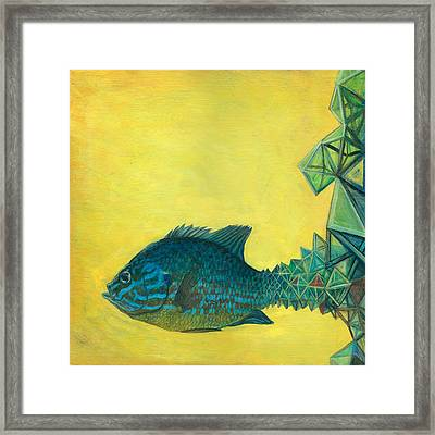 Pumpkin-seed Sunfish Framed Print