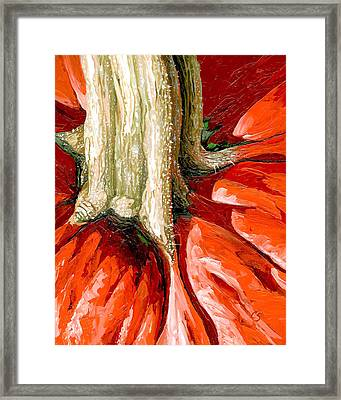 Pumpkin Stem Framed Print