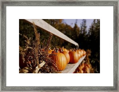 Pumpkins Aglow Framed Print by Christine Tuck
