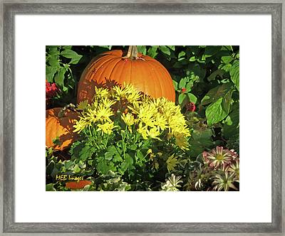 Pumpkins And Mums Framed Print by Margaret Buchanan