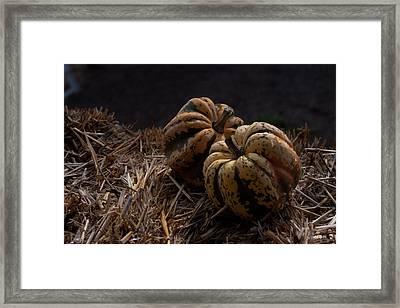 Pumpkins Framed Print by April Bielefeldt