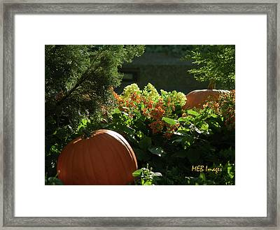 Pumpkins In Autumn Framed Print by Margaret Buchanan