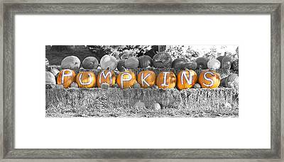 Pumpkins P U M P K I N S Bwsc Framed Print by James BO  Insogna