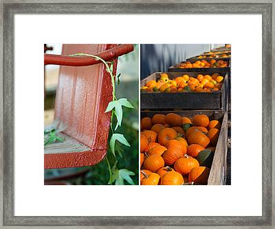 Pumpkins Framed Print by Rebecca Cozart