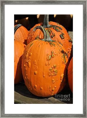 Pumpkinville Framed Print