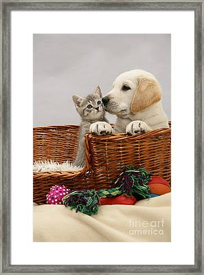 Pup And Kitten In Basket Framed Print