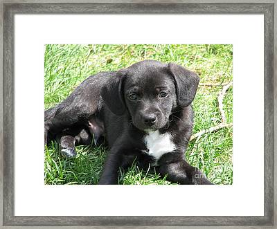 pup Framed Print by Bobbylee Farrier