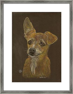 Pup Framed Print by Stephanie L Carr