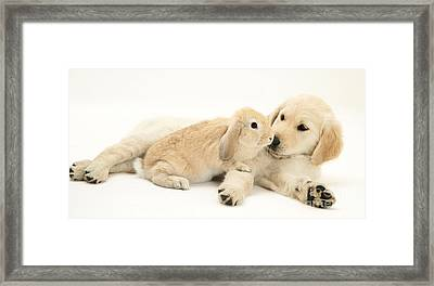 Pup With Rabbit Framed Print by Jane Burton