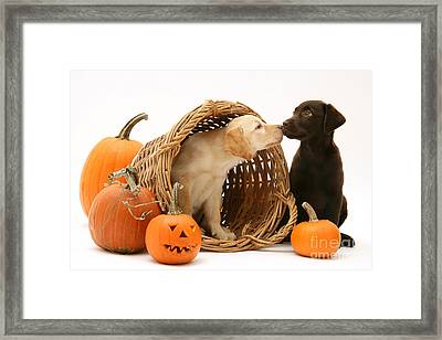 Puppies At Halloween Framed Print
