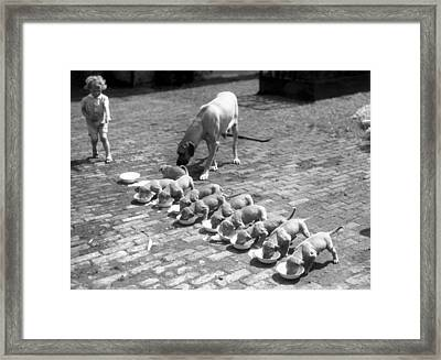 Puppies Framed Print by Fox Photos