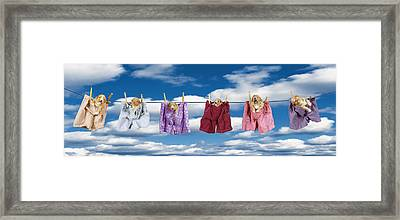 Puppies Hanging Out Framed Print by Darwin Wiggett