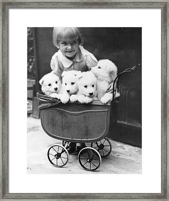 Puppies In A Pram Framed Print by Fox Photos