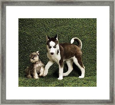 Puppies On Background Framed Print by Catherine Ledner