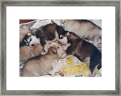 Puppies Suck Framed Print