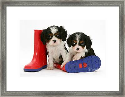 Puppies With Rain Boats Framed Print by Jane Burton