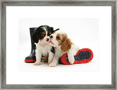 Puppies With Rain Boots Framed Print by Jane Burton