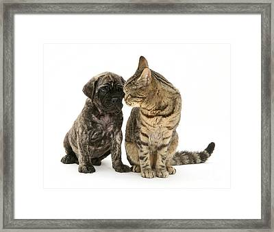 Puppy And Cat Framed Print by Jane Burton