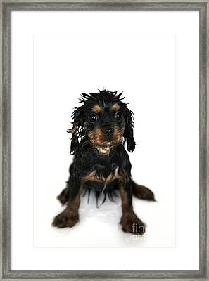 Puppy Bathtime Framed Print