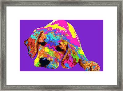 Puppy  Framed Print by Chandler  Douglas