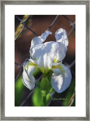 Framed Print featuring the photograph Puppy Dog Ears by Joan Bertucci