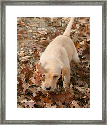 Puppy Fun In Leaves Framed Print by Linda Phelps