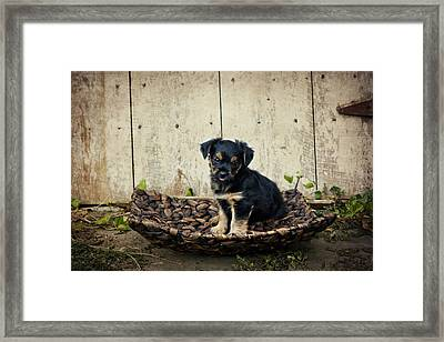 Puppy In A Tray Framed Print