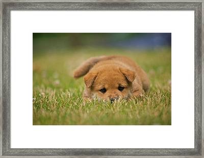 Puppy In Grass Framed Print by Eric Jung