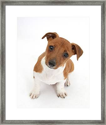 Puppy Looking Up Framed Print by Mark Taylor