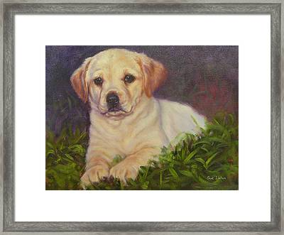 Puppy Love Framed Print by Sue Linton