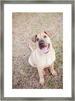 Puppy Framed Print by Lysandra Cook